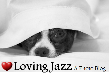logo loving jazz 2